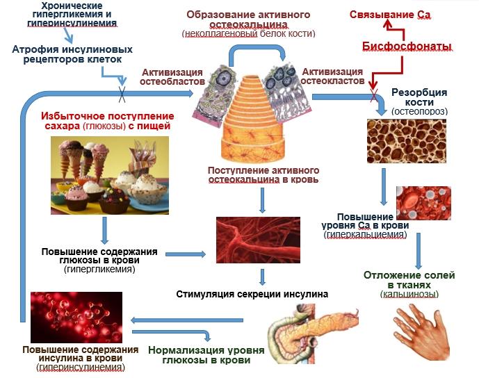 взаимосвязь обмена кальция и глюкозы