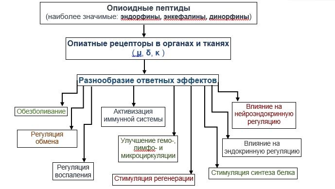 регуляторные пептиды